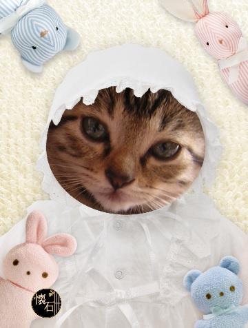 懐石猫1.jpg